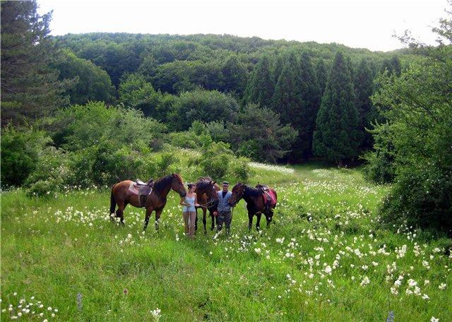 Заповедник, конные прогулки, цены Алушта