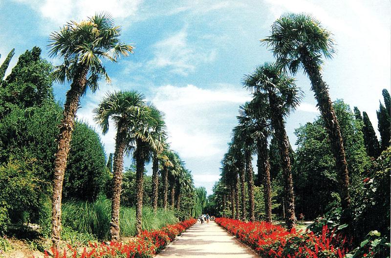 Никитский ботанический сад, цены и раписание